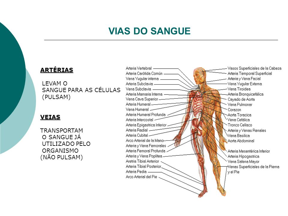 VIAS DO SANGUE ARTÉRIAS LEVAM O SANGUE PARA AS CÉLULAS (PULSAM) VEIAS