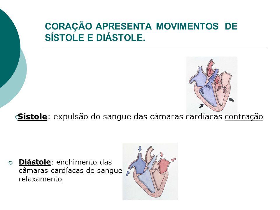 CORAÇÃO APRESENTA MOVIMENTOS DE SÍSTOLE E DIÁSTOLE.