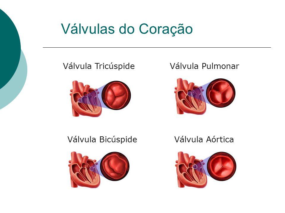 Válvulas do Coração Válvula Tricúspide Válvula Pulmonar