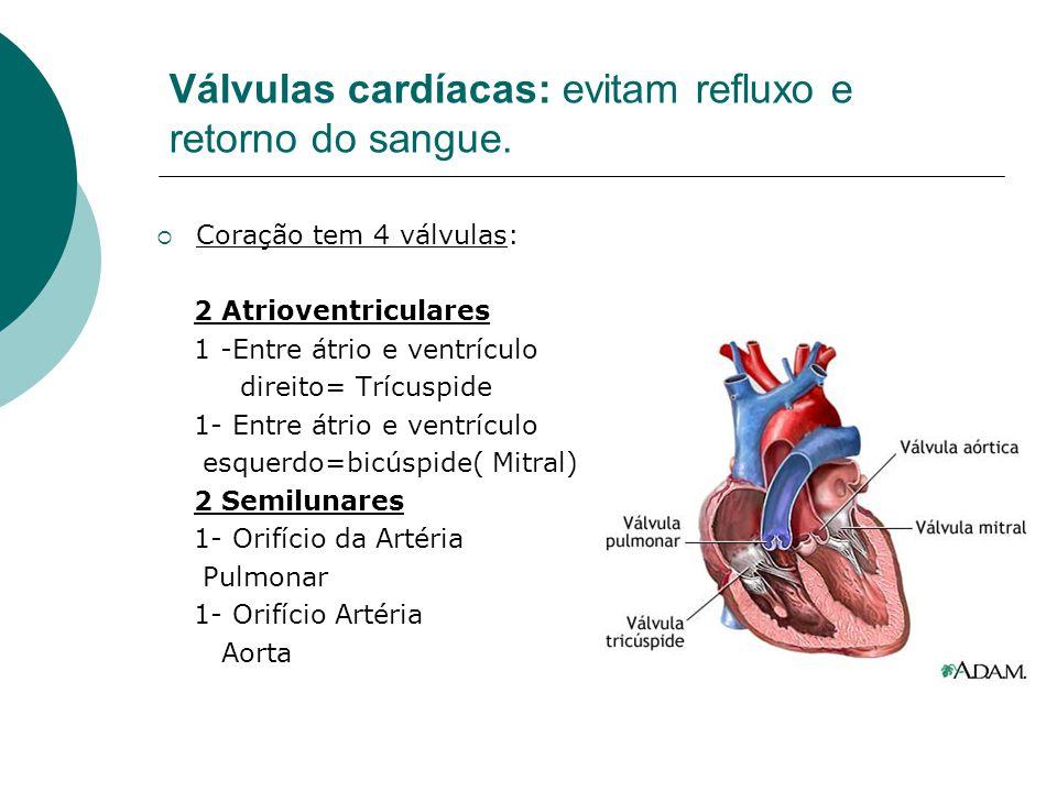 Válvulas cardíacas: evitam refluxo e retorno do sangue.