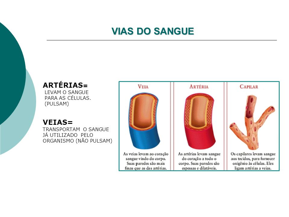 VIAS DO SANGUE ARTÉRIAS= VEIAS= LEVAM O SANGUE PARA AS CÉLULAS.