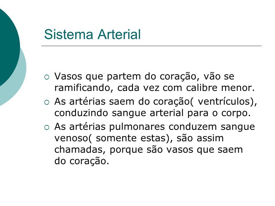 Sistema Arterial Vasos que partem do coração, vão se ramificando, cada vez com calibre menor.