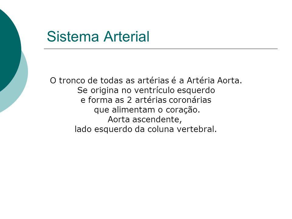 Sistema Arterial O tronco de todas as artérias é a Artéria Aorta.