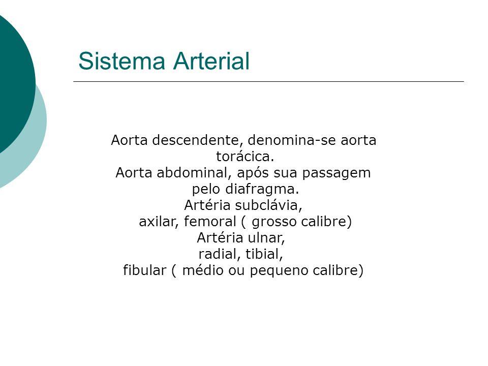 Sistema Arterial Aorta descendente, denomina-se aorta torácica.