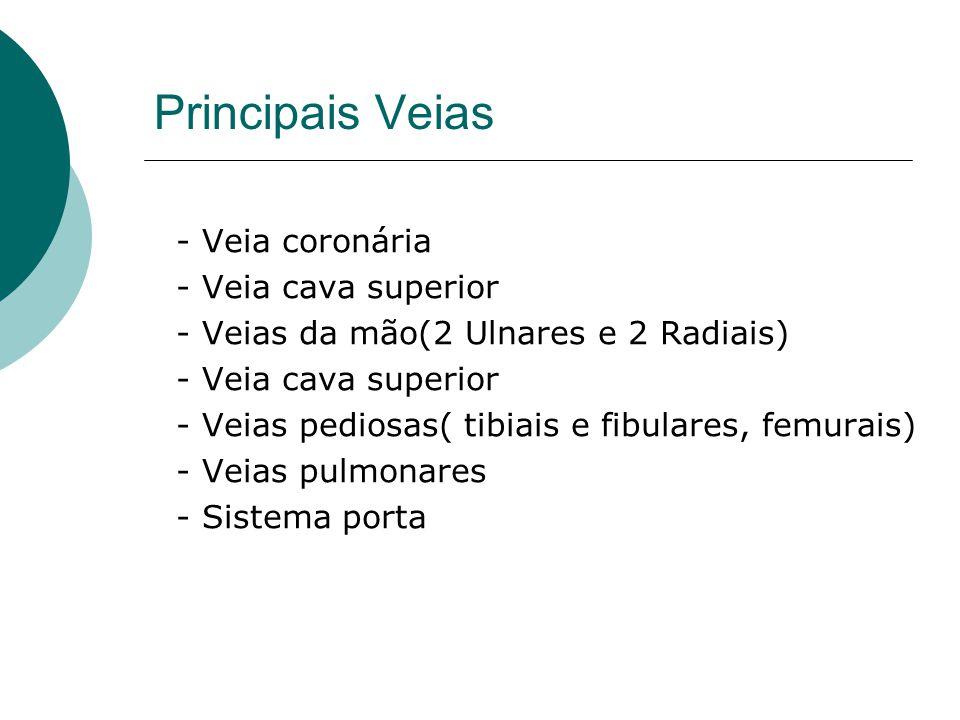 Principais Veias - Veia coronária - Veia cava superior