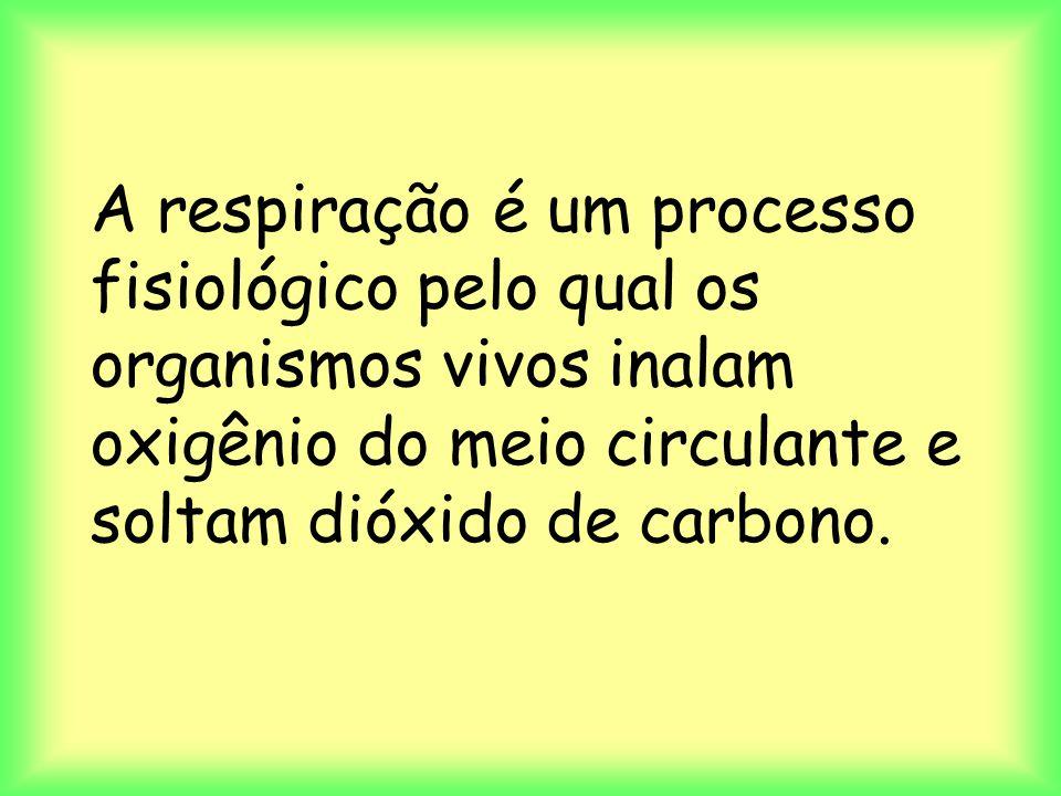 A respiração é um processo fisiológico pelo qual os organismos vivos inalam oxigênio do meio circulante e soltam dióxido de carbono.