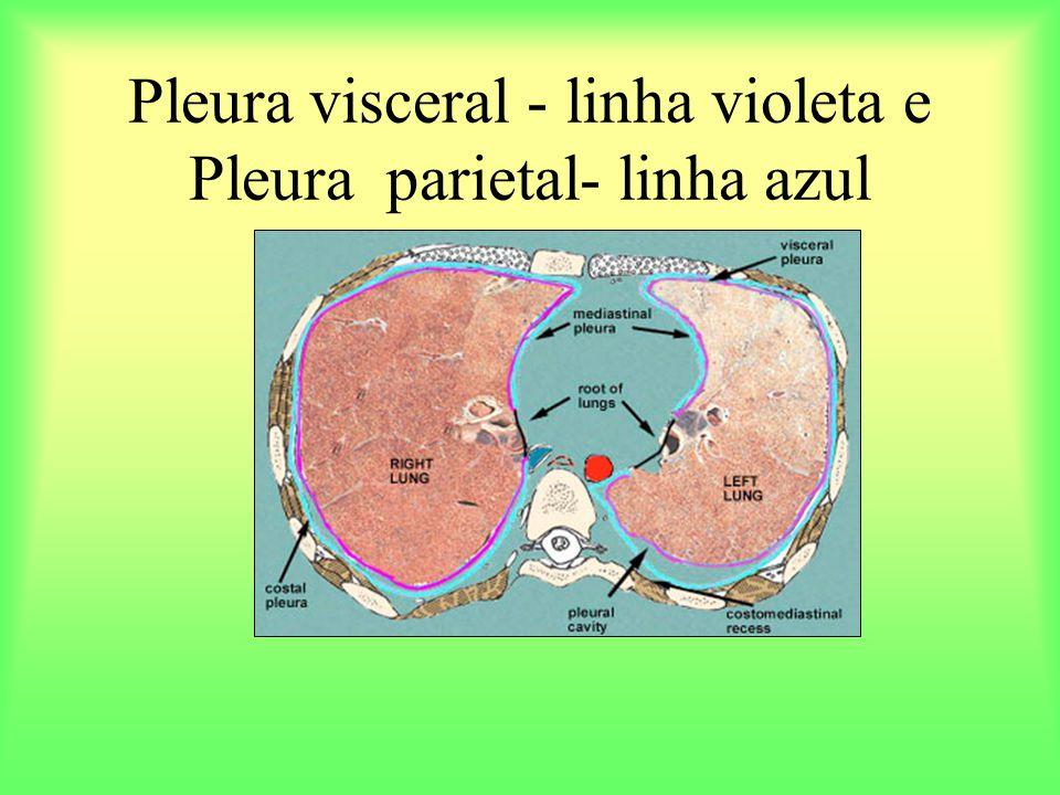 Pleura visceral - linha violeta e Pleura parietal- linha azul