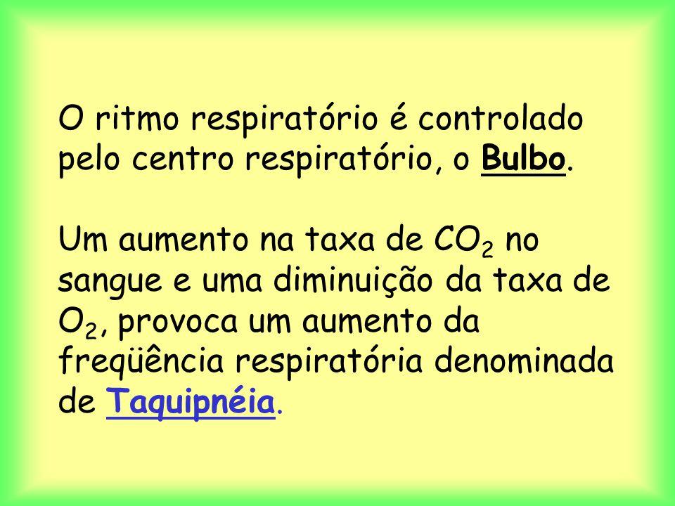 O ritmo respiratório é controlado pelo centro respiratório, o Bulbo