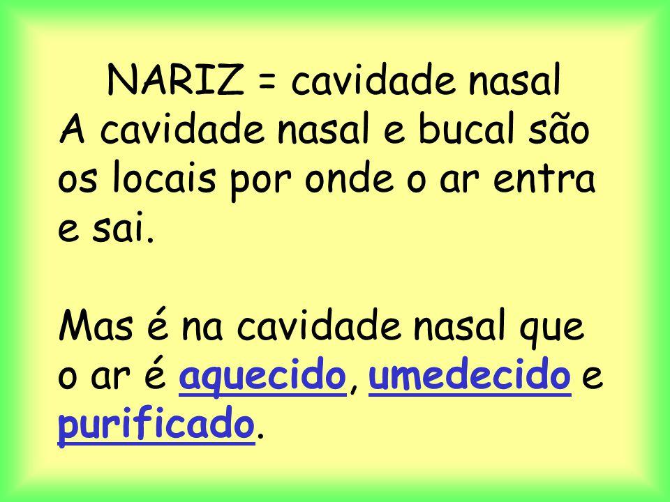 NARIZ = cavidade nasal A cavidade nasal e bucal são os locais por onde o ar entra e sai.