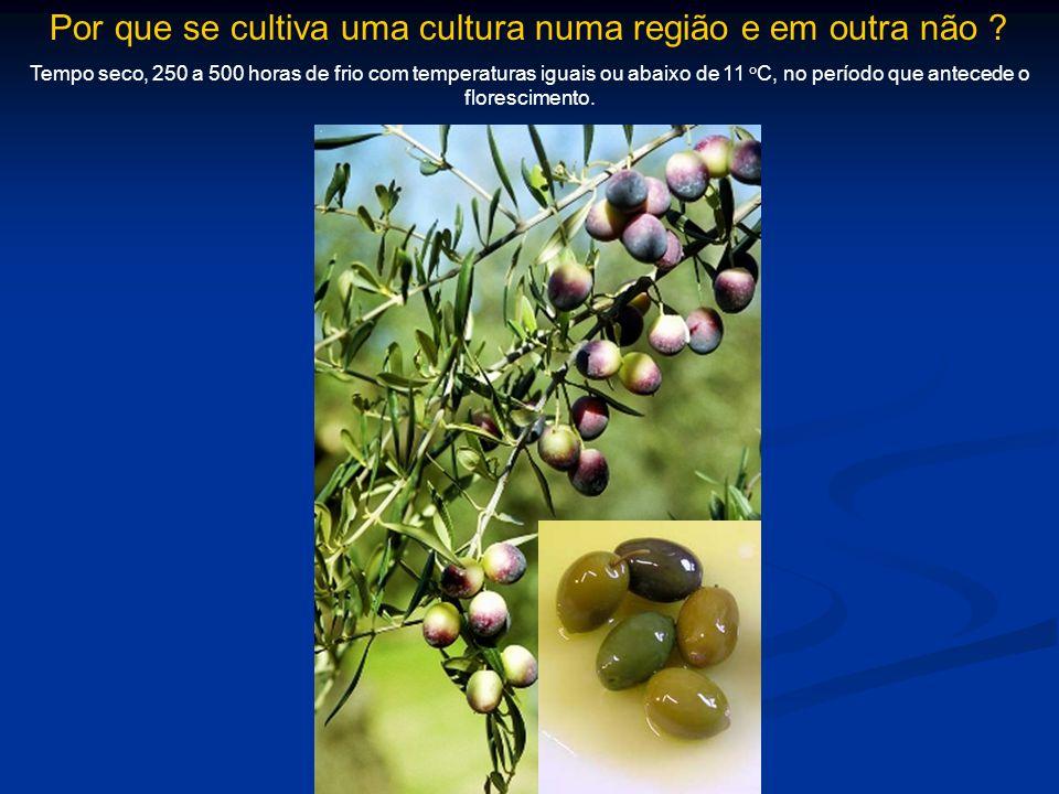 Por que se cultiva uma cultura numa região e em outra não