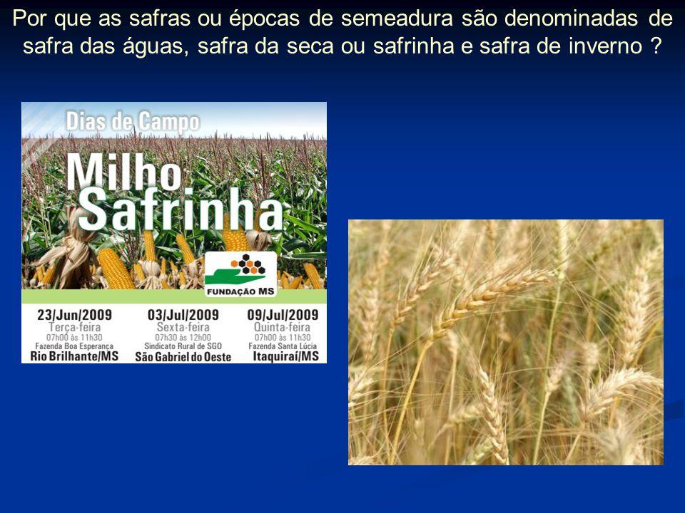 Por que as safras ou épocas de semeadura são denominadas de safra das águas, safra da seca ou safrinha e safra de inverno