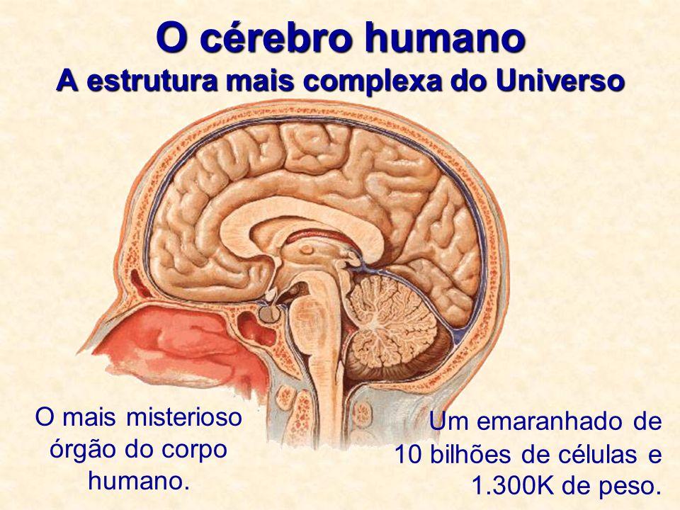 O cérebro humano A estrutura mais complexa do Universo