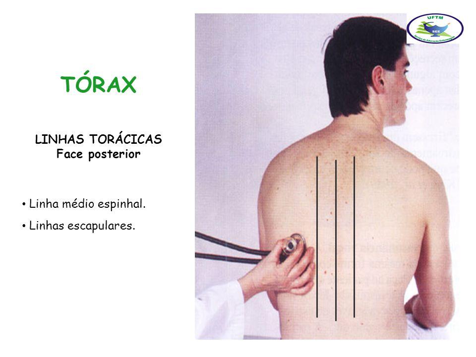 TÓRAX LINHAS TORÁCICAS Face posterior Linha médio espinhal.