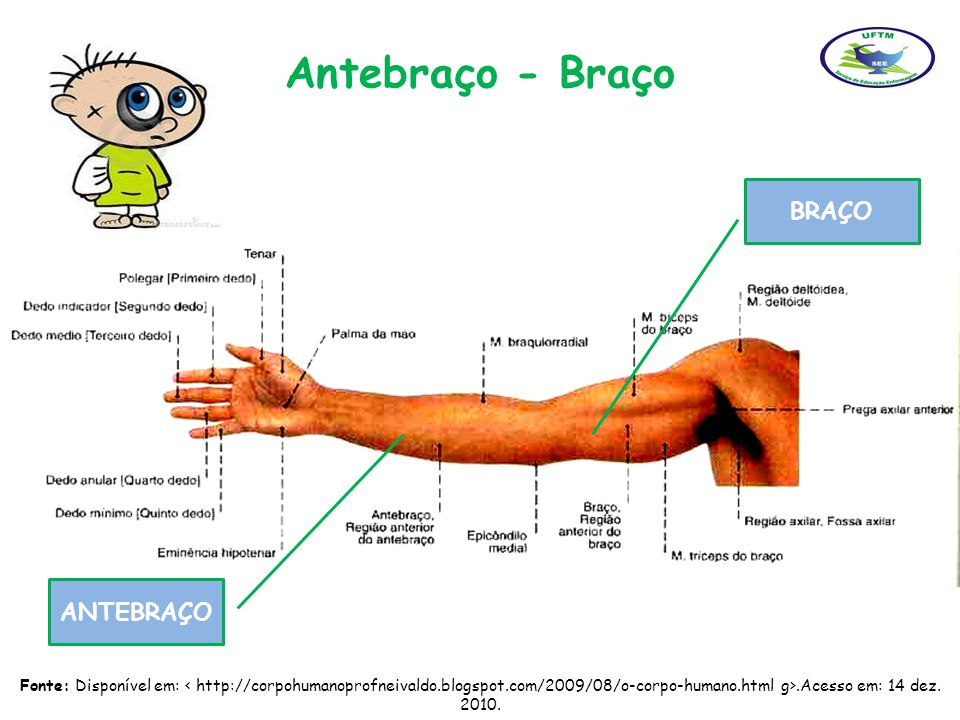 Antebraço - Braço BRAÇO ANTEBRAÇO