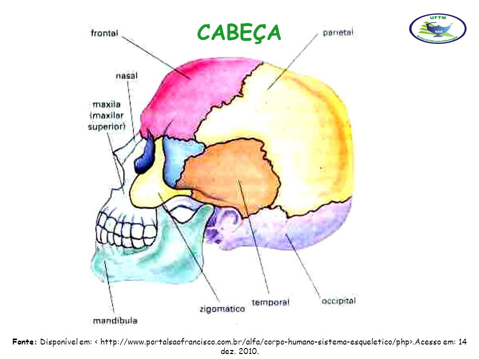 CABEÇA Fonte: Disponível em: < http://www.portalsaofrancisco.com.br/alfa/corpo-humano-sistema-esqueletico/php>.Acesso em: 14 dez.