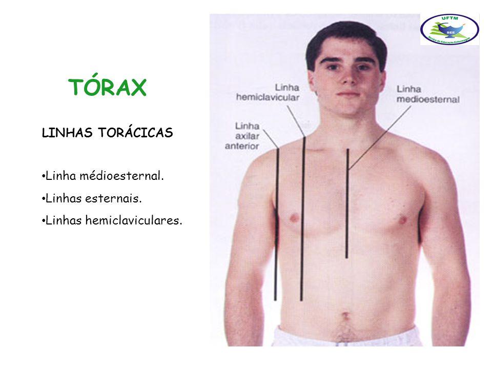 TÓRAX LINHAS TORÁCICAS Linha médioesternal. Linhas esternais.