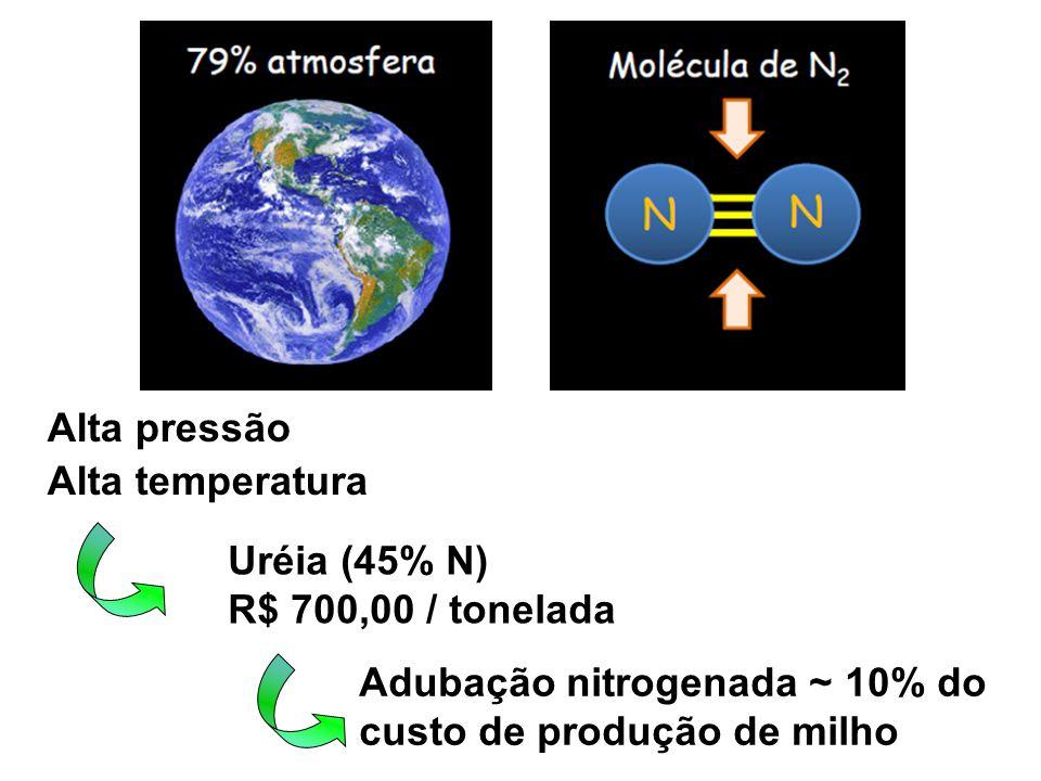 Alta pressão Alta temperatura. Uréia (45% N) R$ 700,00 / tonelada.