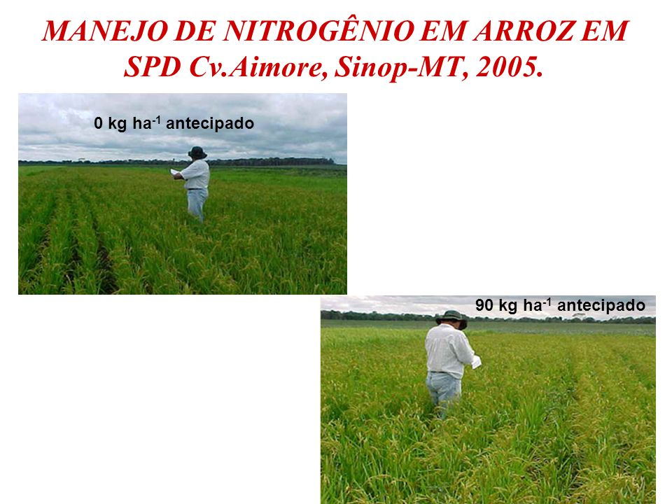 MANEJO DE NITROGÊNIO EM ARROZ EM SPD Cv.Aimore, Sinop-MT, 2005.