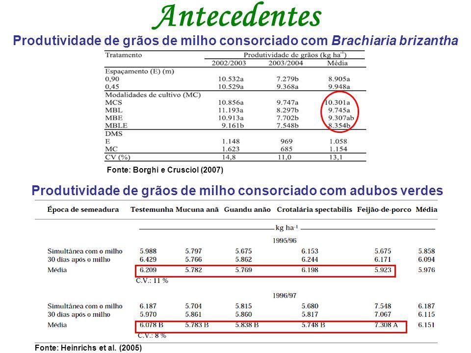 Antecedentes Produtividade de grãos de milho consorciado com Brachiaria brizantha. Fonte: Borghi e Crusciol (2007)