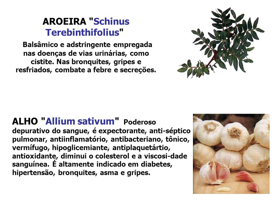 AROEIRA Schinus Terebinthifolius