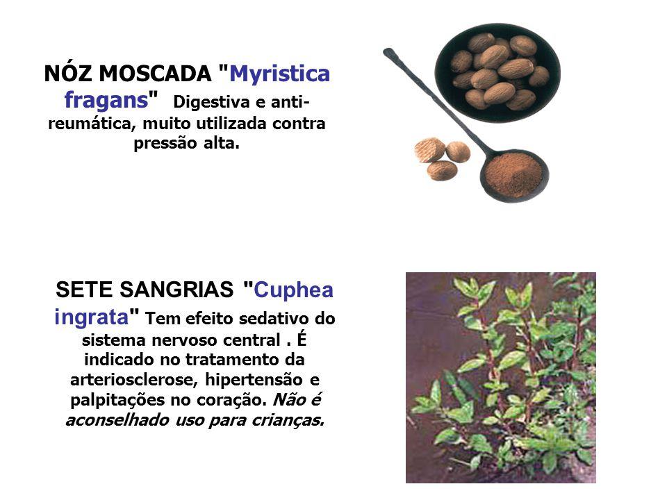 NÓZ MOSCADA Myristica fragans Digestiva e anti-reumática, muito utilizada contra pressão alta.