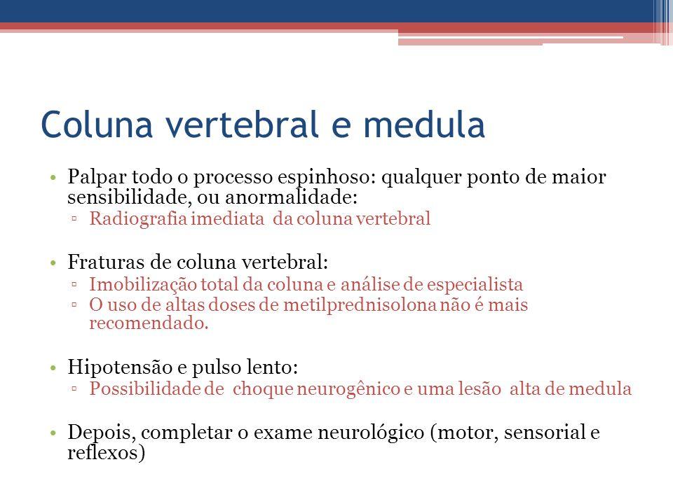 Coluna vertebral e medula