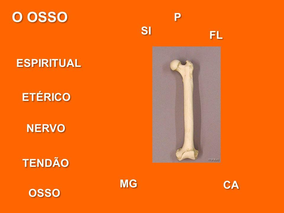 O OSSO P SI FL ESPIRITUAL ETÉRICO NERVO TENDÃO MG CA OSSO