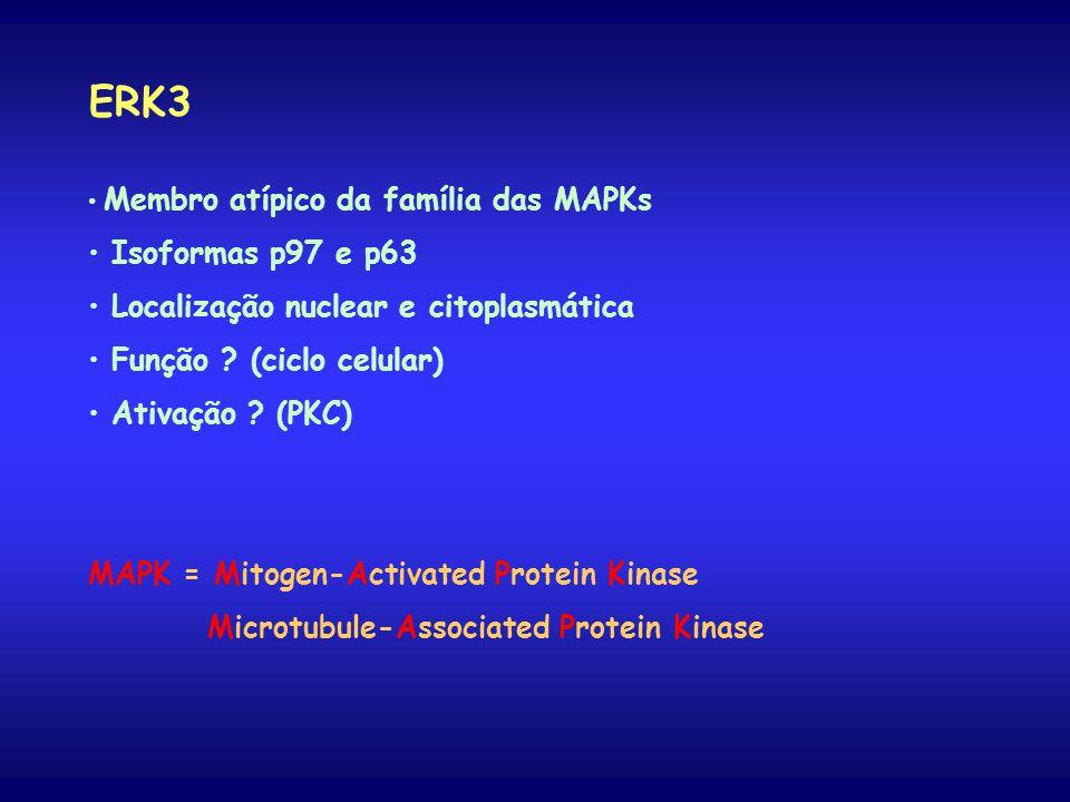 ERK3 Isoformas p97 e p63 Localização nuclear e citoplasmática