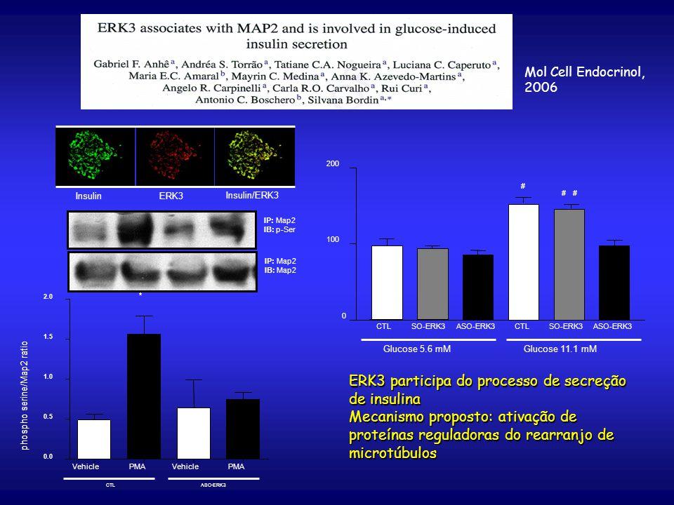 ERK3 participa do processo de secreção de insulina