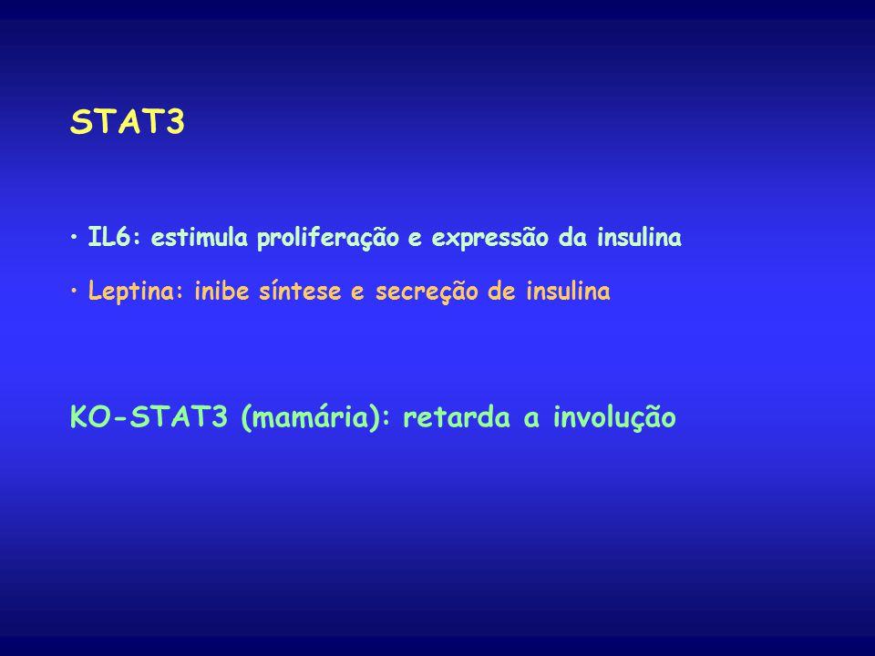 STAT3 KO-STAT3 (mamária): retarda a involução
