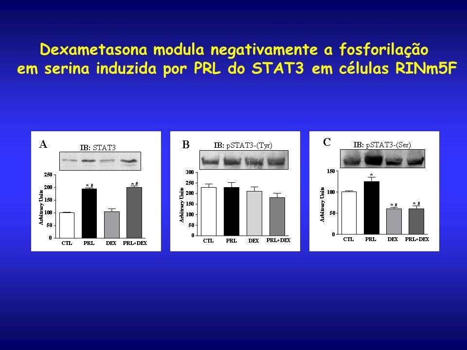 Dexametasona modula negativamente a fosforilação