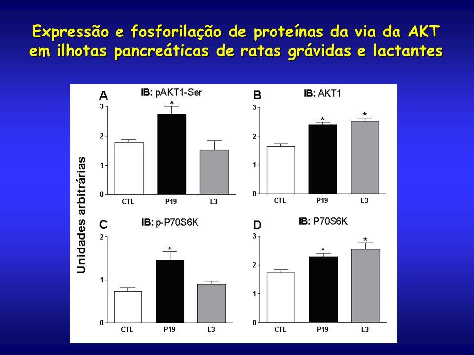 Expressão e fosforilação de proteínas da via da AKT em ilhotas pancreáticas de ratas grávidas e lactantes