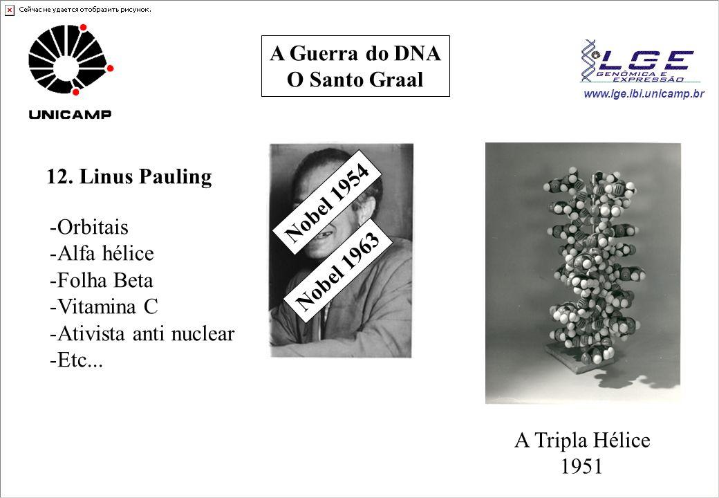 A Guerra do DNA O Santo Graal. 12. Linus Pauling. Nobel 1954. Orbitais. Alfa hélice. Folha Beta.