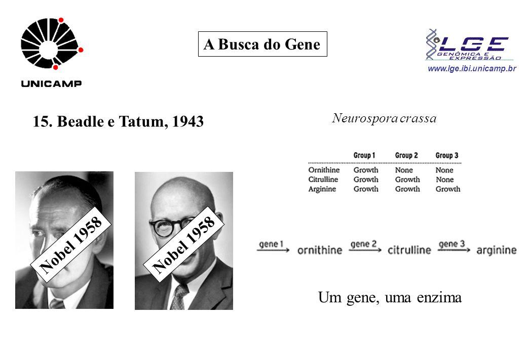 A Busca do Gene 15. Beadle e Tatum, 1943 Nobel 1958
