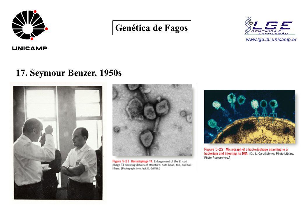 Genética de Fagos 17. Seymour Benzer, 1950s