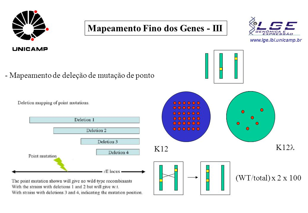 Mapeamento Fino dos Genes - III