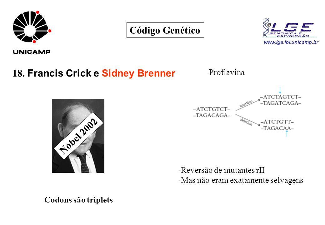 18. Francis Crick e Sidney Brenner