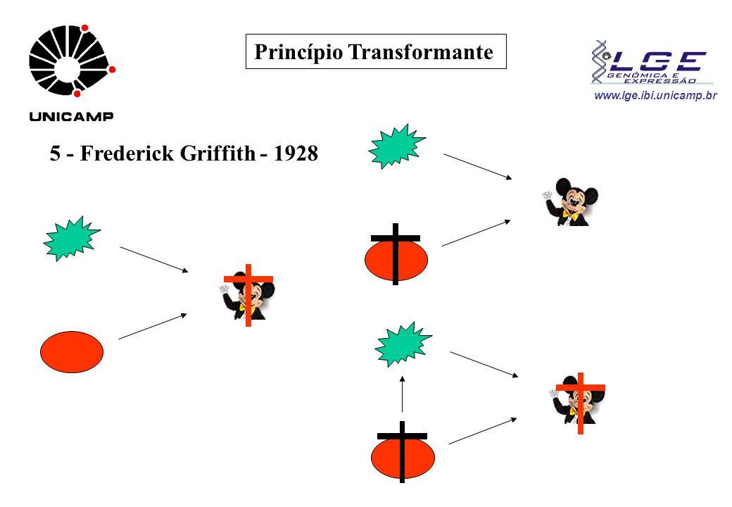 Princípio Transformante