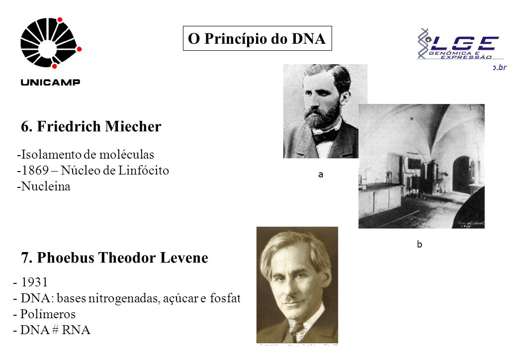 7. Phoebus Theodor Levene