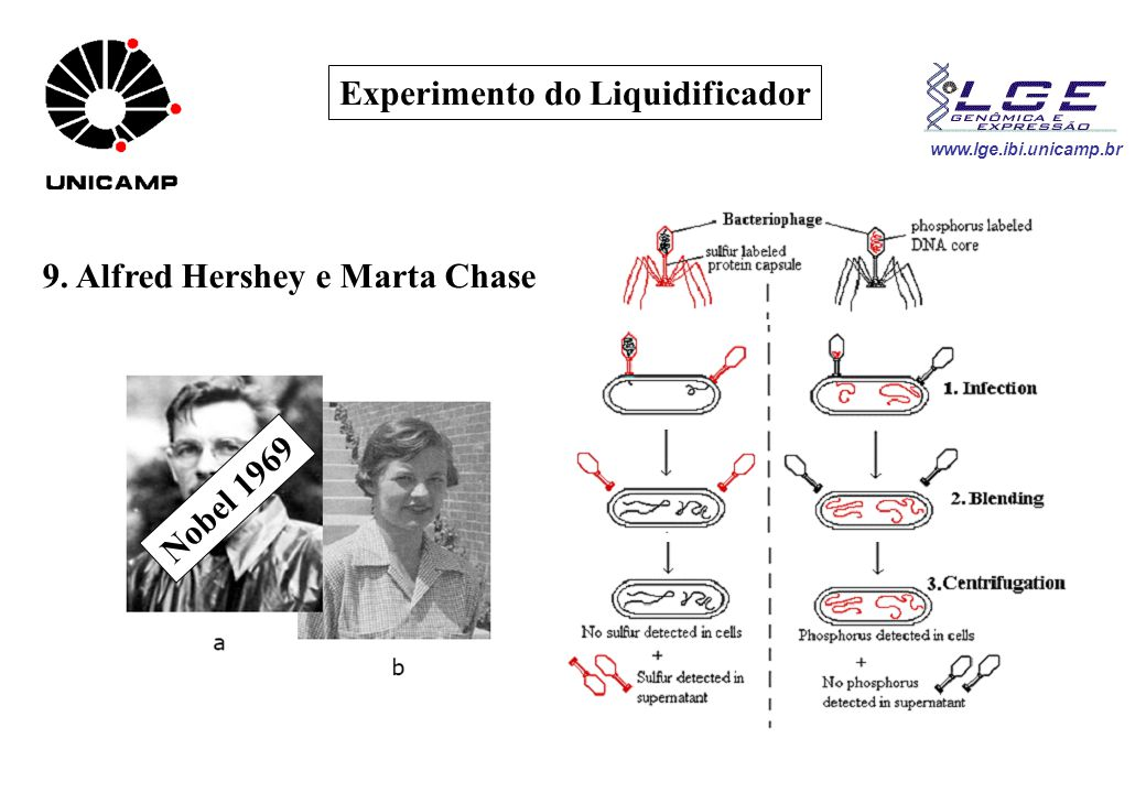 Experimento do Liquidificador