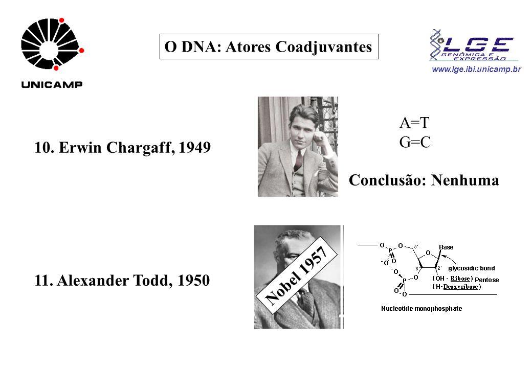 O DNA: Atores Coadjuvantes