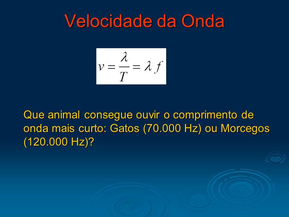Velocidade da Onda Que animal consegue ouvir o comprimento de onda mais curto: Gatos (70.000 Hz) ou Morcegos (120.000 Hz)