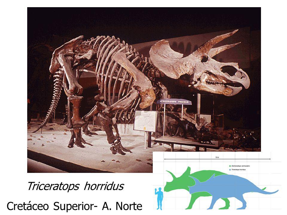 Cretáceo Superior- A. Norte