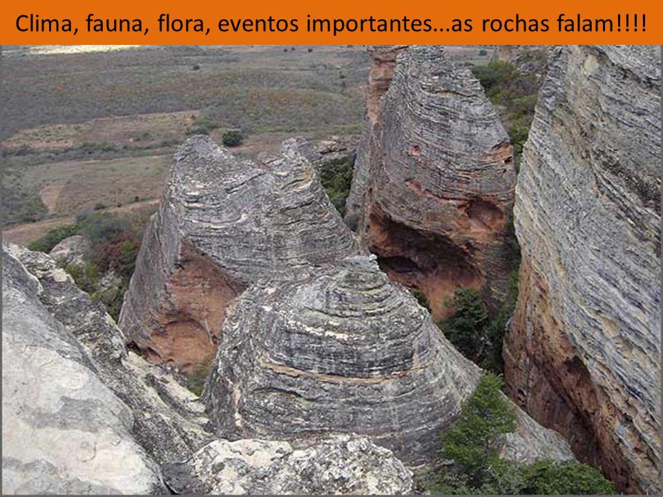 Clima, fauna, flora, eventos importantes...as rochas falam!!!!