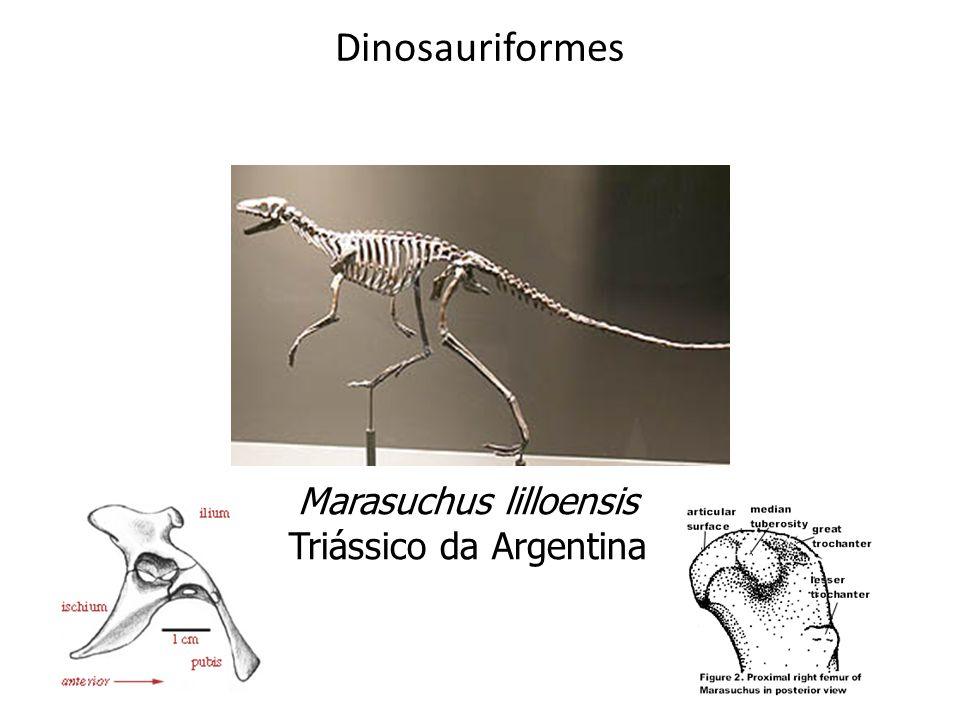 Dinosauriformes Marasuchus lilloensis Triássico da Argentina