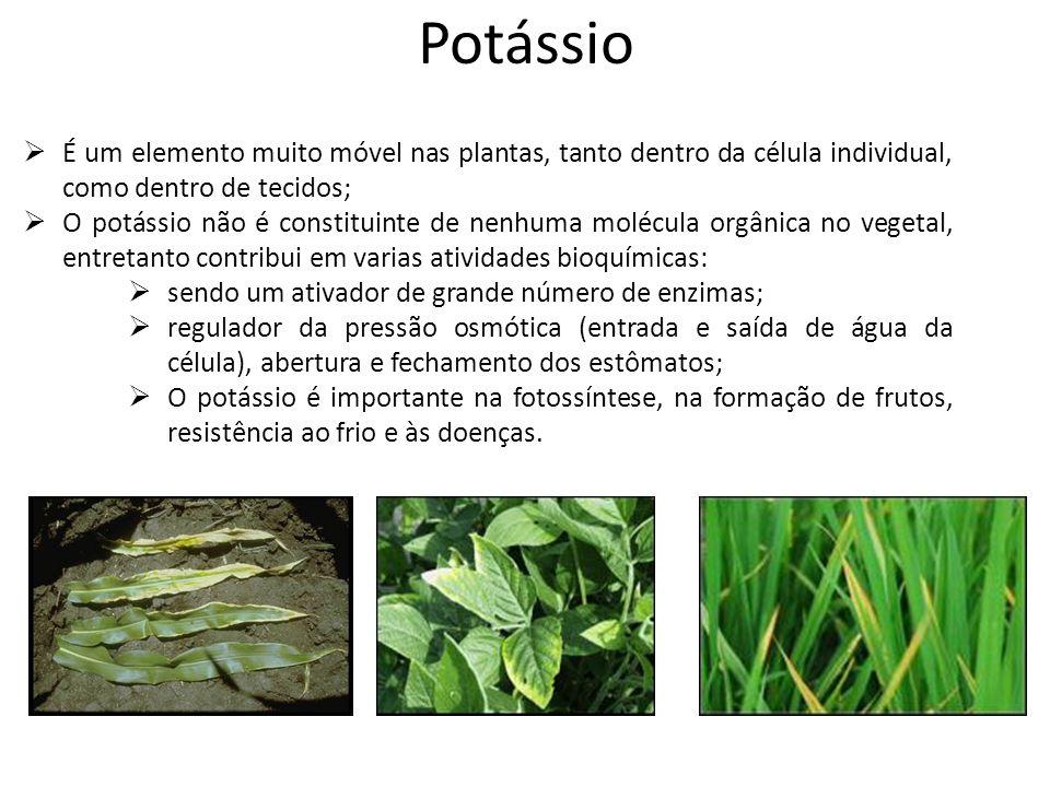 Potássio É um elemento muito móvel nas plantas, tanto dentro da célula individual, como dentro de tecidos;