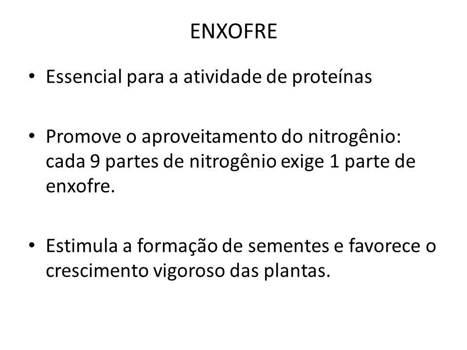 ENXOFRE Essencial para a atividade de proteínas