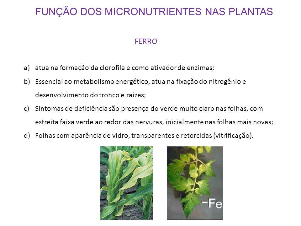 FUNÇÃO DOS MICRONUTRIENTES NAS PLANTAS