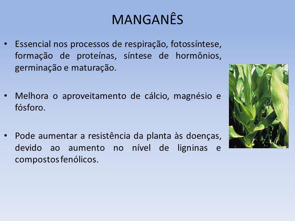 MANGANÊS Essencial nos processos de respiração, fotossíntese, formação de proteínas, síntese de hormônios, germinação e maturação.