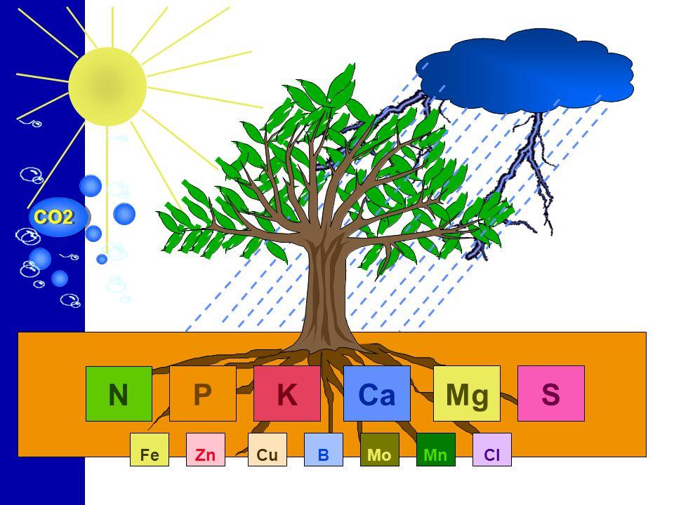 CO2 N P K Ca Mg S Fe Zn Cu B Mn Mo Mn Cl
